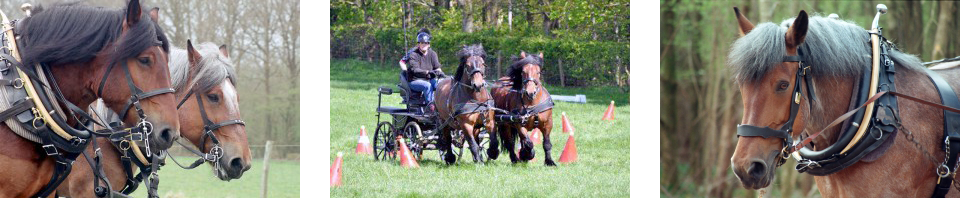 The Working Horse Trust
